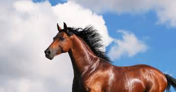 What Type Of Horse Are You?   Playbuzz